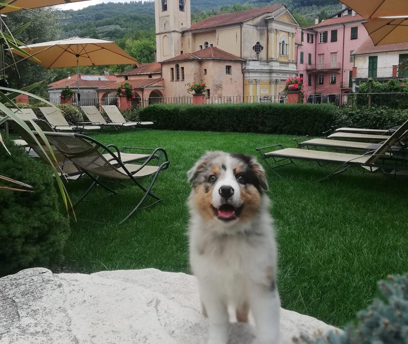 Il Relais del Maro è pet-friendly!