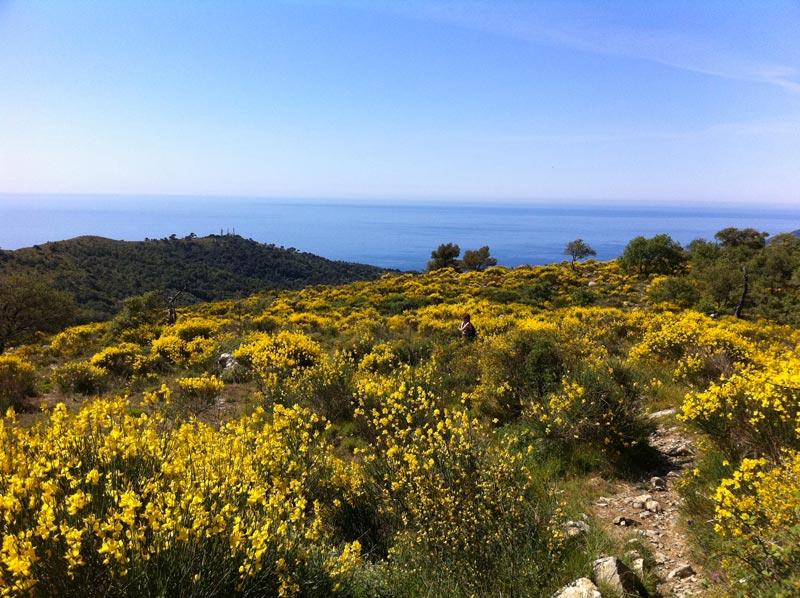 Liguria, profondo verde