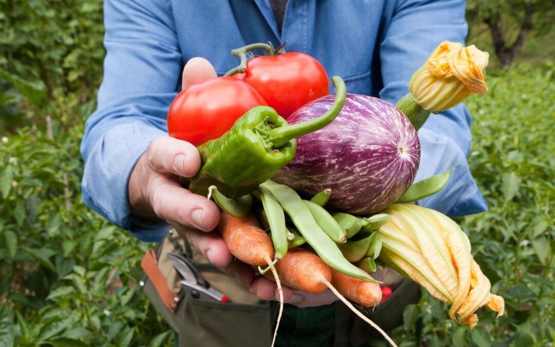 LES PRÉMICES LIGURIENNES   Les secrets des prémices liguriennes: courgettes 'trombette', tomates cœur de bœuf, artichauts et d'autres