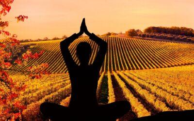 YOGA E PILATES | Yoga e pilates in vigna o sotto gli ulivi