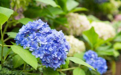 GIARDINO BOTANICO | Giardino botanico Hanbury a Ventimiglia & Villa La Pergola ad Alassio